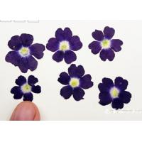 Quality Latest Class A Verbena Dried Flower Gifts , Hanging Dried Flowers For DIY Christmas Card for sale