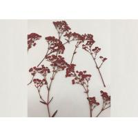 Quality Red Baby Breath Framed Pressed Flowers True Plant For DIY Candle Ornaments for sale