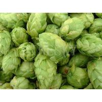 Quality Natural Hops Flower Extract 5% Xanthohumol by HPLC for sale