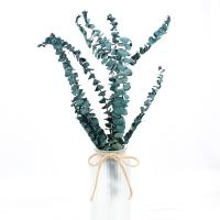 China Forever Preserved Foliage Eucalyptus Big Leaves For Indoor Decoration for sale