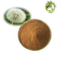 China Factory Supply 100% Natural Organic Dandelion Root Extract/Dandelion Root Powder on sale