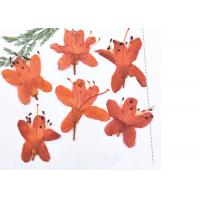 Quality 3D Art Painting Dried Pressed Flowers / Framed Dried Flowers Teaching Specimens Plants for sale
