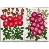 Quality Raw Material Dried Pressed Flowers Eternal Plant For Cell Phone Case Decoration for sale
