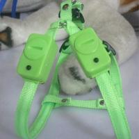 China Supper Bright LED Flashing Dog Harness on sale
