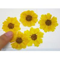 Quality Yellow Hymenoptera Dried Flower Petal Crafts Gift Card Decoration For Children Handicrafts for sale