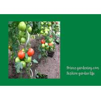 Buy cheap 8mm Colorful Spiral Plant Support , Durable Garden Spiral Tomato Stakes from Wholesalers
