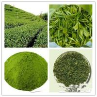Buy Green Tea(Powder&Extract); Matcha powder; Freeze- Dried; prevent diabetes;antioxidant factors & anti-aging at wholesale prices