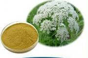 China Natural CAS No 484-12-8 Cnidium Monnieri Extract 10% 98% Osthole on sale