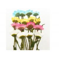 Buy cheap Daisy Miniature Dried Flower Arrangements Handmade Crafts Fit Festival from wholesalers