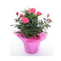 Eco-friendly Recyclable Plant or Flower Pot Covers for Fresh Flowers Retail Store