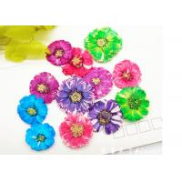 Quality Small Daisy Natural Real Pressed Flowers True Plants Specimens For DIY Photo Frame for sale