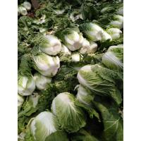 China Lower Blood Pressure Green Flat Head Cabbage Low In Calories Rich Vitamin C on sale