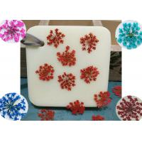 Quality Lace Pressed Flower Gifts True Plants Color Optional For Aroma Wax Home Decoration for sale