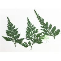 Quality Green Fern DIY Pressed Flowers 2 Different Size Fit Child Hairpin Decorations for sale