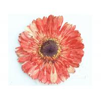 Quality Dye Absorption Gerbera Natural Dried Flowers Plant Material For DIY Parlor Decoration for sale
