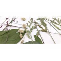 Quality Original Wild Grass Weed Large Pressed Flowers For Aroma Wax Candles for sale