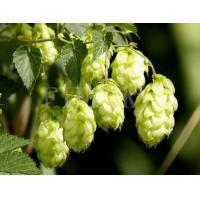 Quality Hops extract supplement pharmaceutical product for sale