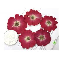 Quality Diameter 3.5CM Red Dried Flowers , Dry Rose FlowerFor Valentines Day Party for sale