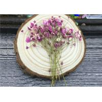 Quality DIY Handmade Long Dried Flowers , Babys Breath Materials Real Dried Flowers for sale