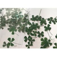 Quality Diameter 0.5-1 CM Natural Dried Flowers Mini Green Clover For Crafts Grass Fill in Materials for sale