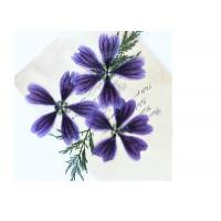 Quality Dark Purple Dried Hollyhock Flowers , Pressed Flower Artwork For Aroma Wax Tablets for sale