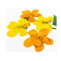 Quality Painting Decoration Diy Dried Flowers / Flat Dried Flowers 3 - 5 CM Diameter for sale