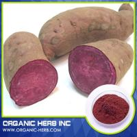 China Food Grade Purple Sweet Potato Pigment Powder/Purple Sweet Potato Color/ vegetable extract on sale
