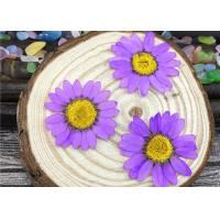 Buy Chrysanthemum Real Pressed Flowers Material Specimens For DIY Art Paper Decoration at wholesale prices