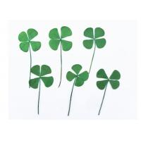 Buy cheap Clover Specimens Framed Pressed Flowers , Green Dried Flowers DIY Handmade from wholesalers