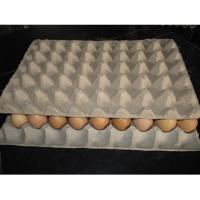 China high quality egg tray making machine on sale