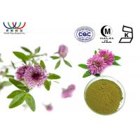 CAS 85085 25 2 Red Clover Extract Powder 20% Isoflavones Benefits For Menopause Women'S Health