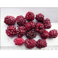 China Raw Fruit Flavour Freeze Dried Blackberries Soft Texture Good For Health for sale