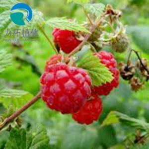 China Food Grade Raspberry Freeze-dried Powder 24 months Shelf life on sale