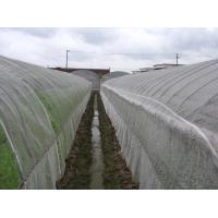 Quality Anti Insect Net 50x35mesh,growing and agriculture using,greenhouse using  50-140g/m2  0.5m-6m width   black,white for sale