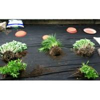 Weed Control Landscape Fabric Quality Weed Control: vegetable garden weed control