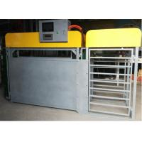 Quality Sheep Automatic Weighing Sub Group Management System Steel Material for sale