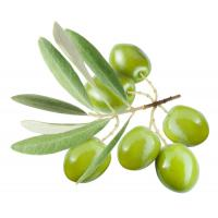 Quality Health care product Finesky olive leaf extract supplement for sale