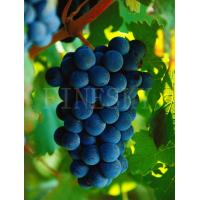 Quality Grape seed extract capsule tonic product for sale