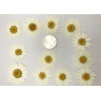 Quality Colorful Pressed Flower Arrangements Size 3 CM For Wedding Gift Decoration for sale