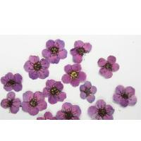 Quality Purple Colour Narcissus Dried Flower Nail Art For DIY Nail Accessories for sale