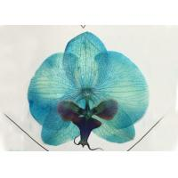 Quality Unique Blue Orchid Natural Dried Pressed Flower For Christmas Decoration for sale