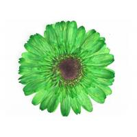 Quality Dye Absorption Unique Gerbera Pressed Dried Flowers Framed Art For DIY Decoration for sale