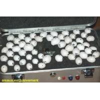 Buy cheap Parrot Eggs, guaranteed. from Wholesalers
