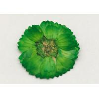 Quality Dye Green Dried Flowers , Dried Daisy Flowers For Epoxy Recycled Flowers for sale