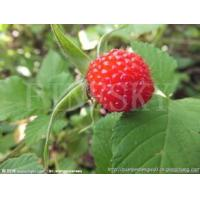 Quality Herbal raspberry extract powder for medicines for sale