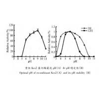 Quality Yeast Kex2 Protease Endoproteolytic Processing Of Recombinant Proalbumin Variants for sale