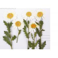 Buy cheap Holidays Cards Nature DIY Pressed Flowers / Pressing Wedding Flowers from wholesalers