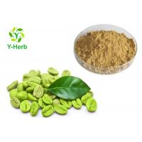 China Green Coffee Bean Extract Powder 50% For Loss Weight Chlorogenic Acid on sale