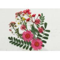 Quality Colorful Framed Pressed Flowers Arrangement Daisy / Leaves / Fern For DIY Decoration for sale