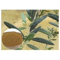 Quality 80 Mesh Natural Olive Leaf Extract Powder Food Grade Improving Immune System for sale